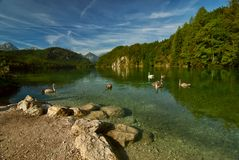 Landscape with swans, lake and mountains Royalty Free Stock Images
