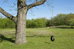 Landscape Of A Swing Hanging From A Tree Screensaver  Background Royalty Free Stock Photo