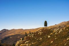 Landscape of the Swiss Alps and forest of national parc in Switzerland. Alps of Switzerland on autumn. Fluela pass road. . Swiss c Royalty Free Stock Photo