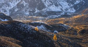 Landscape of the Swiss Alps and forest of national parc in Switzerland. Alps of Switzerland on autumn. Fluela pass road. . Swiss c Royalty Free Stock Images