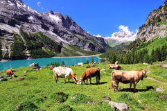 Landscape in Switzerland Royalty Free Stock Image