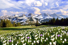 Landscape in Switzerland Royalty Free Stock Photography