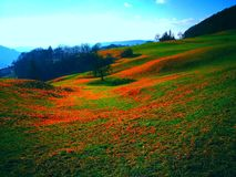 Landscape in Switzerland. This photo i& x27;ve made near to a forest in switzerland stock photography