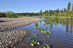 Landscape of the taiga river. Stock Photos