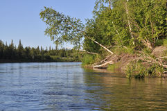 Landscape of the taiga river. Stock Photography