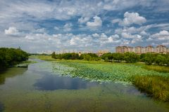 The landscape of Taihu lake. Wuxi, China royalty free stock images