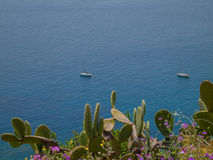 Landscape. Taormina bay and Mediterranean flora Royalty Free Stock Image