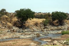 Tarangire river Royalty Free Stock Images