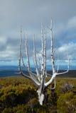 Landscape of Tasmania Royalty Free Stock Images