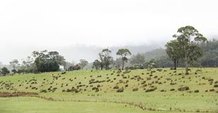 Landscape of Tasmania Country side. Cloudy Beautiful Tasmania country side village in the town of Sorell to Port Arthur Royalty Free Stock Photo