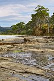 Landscape in Tasmania. Tessellated Pavement Royalty Free Stock Images