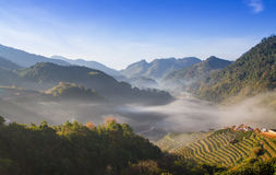 Landscape of Tea Field with fog in morning at Chiangmai Stock Image