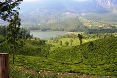 Landscape tea garden of munnar, kerala. A green landscaped tea garden valley in munnar kerala Stock Photography
