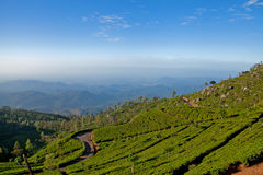 Landscape of tea plantations. In Haputale, Sri Lanka stock photography