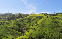 Landscape with tea plantations Royalty Free Stock Photography