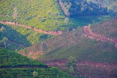 Multi colored landscape of the tea plantations Stock Image