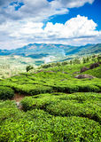 Tea plantations in India Royalty Free Stock Photos