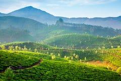 Tea plantations in India Stock Photo