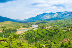 Landscape of the tea plantations, mountain and the river Royalty Free Stock Images