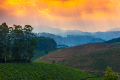 Landscape tea plantations and mountains in a pre-dawn haze, India kerala Stock Photography
