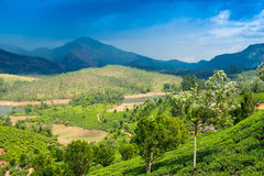 Landscape tea plantations, mountains and the river in India Stock Photography