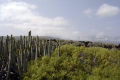Landscape, Tenerife Stock Photos