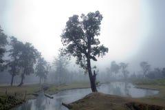 Landscape of Terai, Bardia, Nepal Stock Image