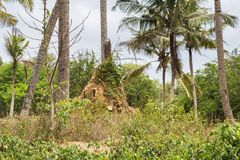 Termites nest in Sri lanka. Landscape with a Termites nest in Sri lanka Royalty Free Stock Photography