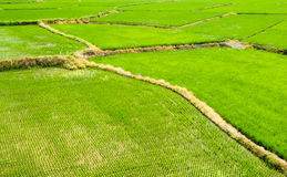 Landscape of terraced field Royalty Free Stock Photo