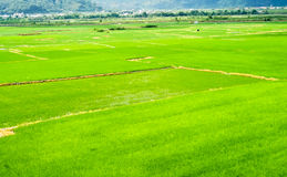 Landscape of terraced field Stock Photos