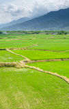 Landscape of terraced field Royalty Free Stock Image