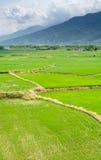 Landscape of terraced field Royalty Free Stock Image