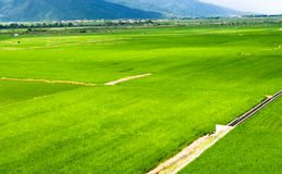 Landscape of terraced field Royalty Free Stock Photography