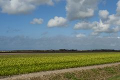 Landscape at Texel stock photography