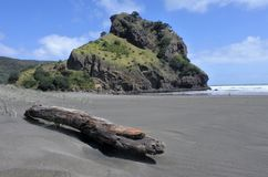 Landscape of th Lion rock on Piha beach. In the west coast on the North Island near Auckland, New Zealand royalty free stock image