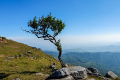Landscape thai with tree Royalty Free Stock Images