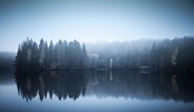 Landscape with threes on a coast, fog and still lake. Blue toned photo. Autumnal landscape with threes on a coast, fog and still lake Royalty Free Stock Photography