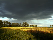 Landscape thunderclouds over the field and trees on a summer day Royalty Free Stock Images