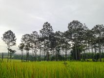 Landscape. Thung Salaeng Luang National Park National Park in Thailand Stock Photos