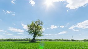 Landscape timelapse of a lonely tree. Landscape timelapse of a lonely tree in the middle of a field on a cloudy day stock footage