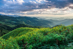 Landscape of Tithonia diversifolia field and mountain ranges stock image