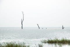 Landscape in Toko near lake Volta in the Volta Region in Ghana Stock Photography