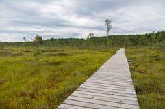 Landscape of Tolkuse bog with plank pathway Stock Image