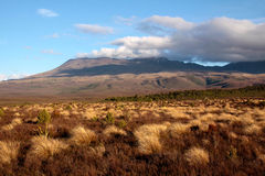 Landscape in the Tongariro National Park Royalty Free Stock Images