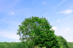 Landscape of a top of trees and sky Royalty Free Stock Photo
