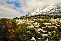 Landscape of Torres del Paine Royalty Free Stock Image