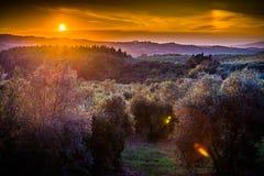 Landscape Toscana Stock Photo