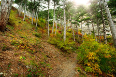 Landscape trail in autumn forest Stock Photo