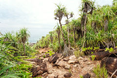 Landscape trails rocky tropical beach. Stock Photography
