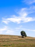 Landscape and tree. Lonely tree over a lightly cloudy blue sky. Italy, Europe Stock Photos